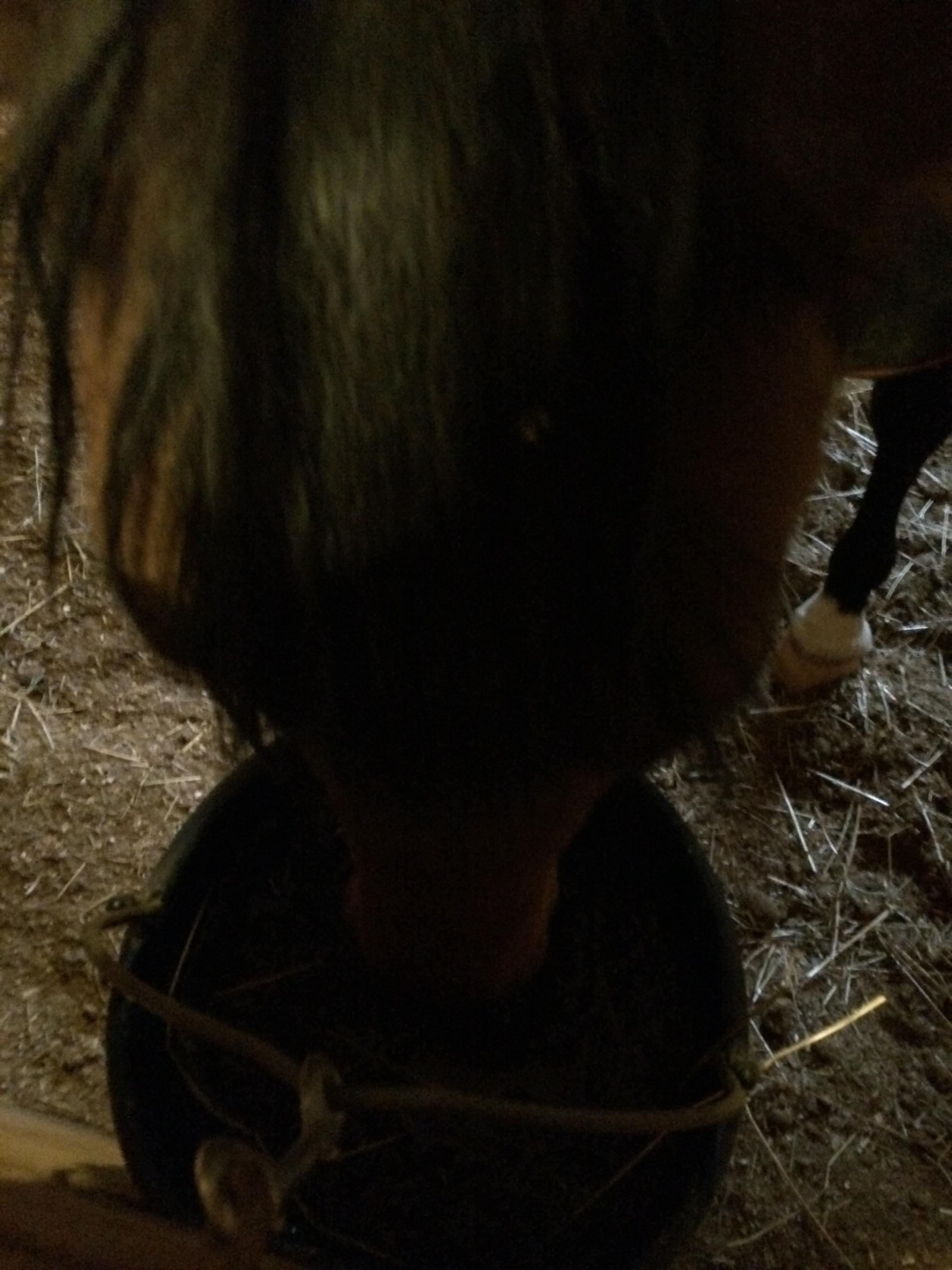 Bucket Insulator Update The Legal Equestrian