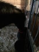 Pony enjoying his non-frozen bucket cover water.