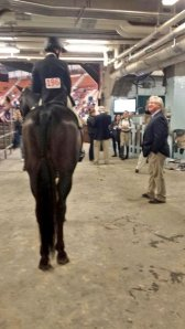 Kendra & Squish waiting to enter the ring. Photo Courtesy of Kendra Harnch.